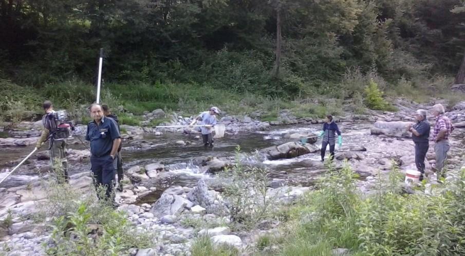 Le nostre guardie nel torrente Imagna recuperano 12kg di pesce, intervento necessario  per lavori di consolidamento della sponda