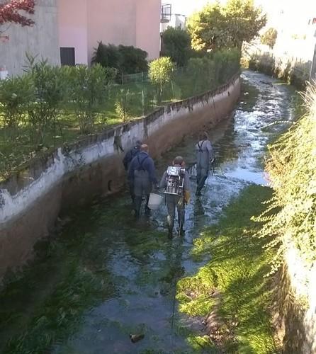 Recupero di materiale ittico nella roggia Morlana a Nembro con le guardie Fipsas Bergamo