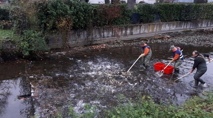 Intervento interprovinciale con Fipsas Cremona: ancora una volta Fipsas Bergamo a sostegno della fauna ittica