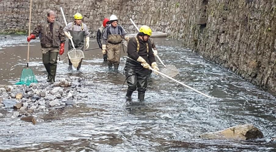 Intervento di recupero ittico tra Bracca e Algua. Guardie volontarie Fipsas Bergamo e iscritti della società Al. Bra insieme per la tutela del Serina