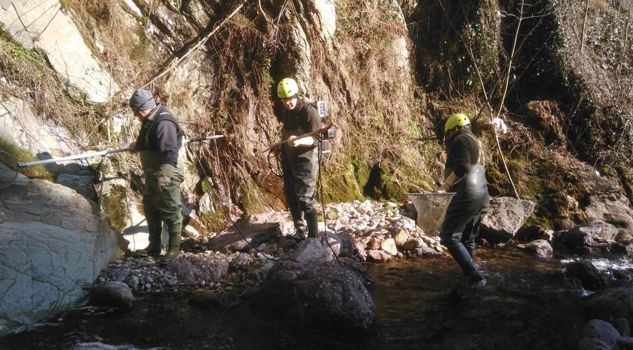 Recupero nel tratto ZPR del Torrente Valle Inferno a Ornica grazie alla collaborazione del Gruppo Pesca Ornica insieme alle nostre guardie