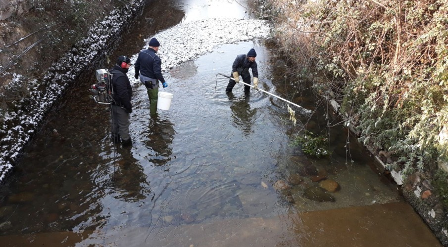 Recupero ittico con le guardie Fipsas Bergamo nella Roggia Serio ad Albino e Nembro alla fine di febbraio